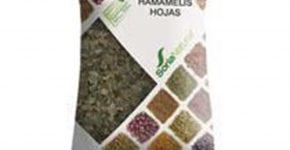 Hojas de Hojas de Hamamelis Soria Natural y las afecciones venosas