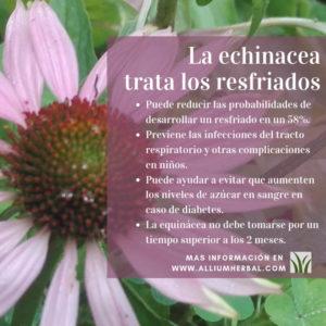 Propiedades de la Echinacea o equinacea