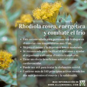 Propiedades de la rhodiola