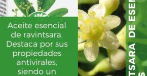 Aceite esencial de ravintsara 5 ml de Esential Aroms