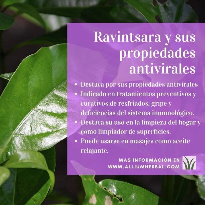 Ravintsara, aceite esencial de alcanforero con propiedades antivirales
